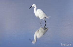 2012-01-24 Aigrette G Le Teich 2-