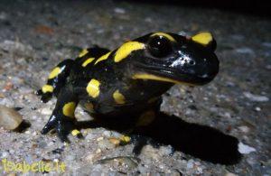 2015-11-25 salamandre Léognan 5-